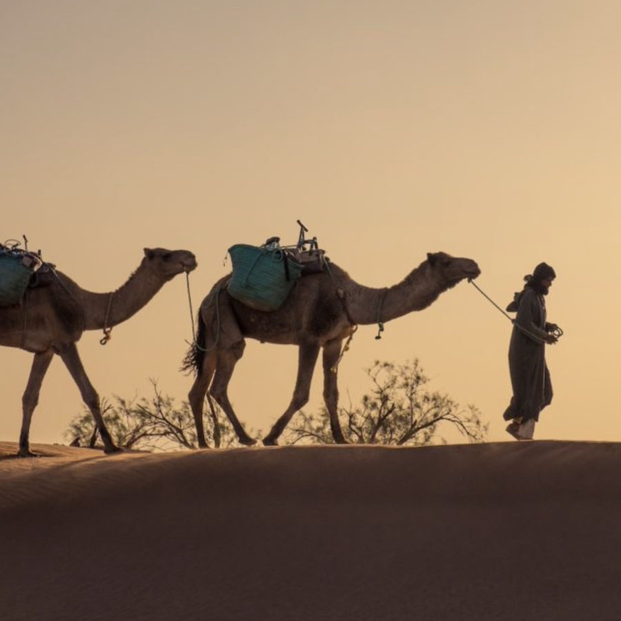 méharée Maroc
